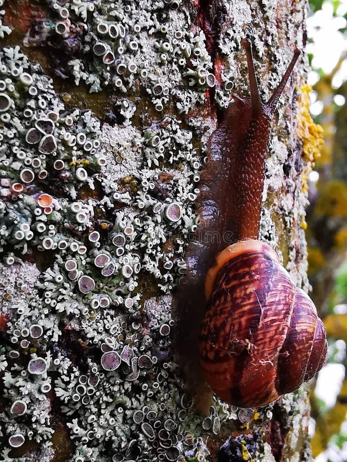在青苔的蜗牛 免版税库存照片