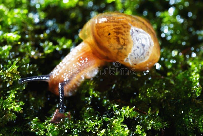 在青苔的蜗牛 免版税库存图片