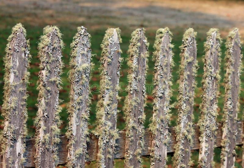 在青苔盖的尖桩篱栅 免版税库存图片
