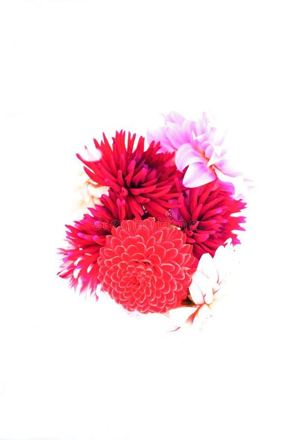 在静物画的花 图库摄影