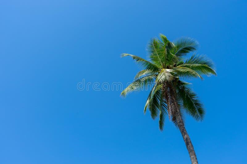 在非常清楚蓝天背景的椰子树 免版税库存图片