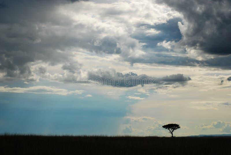 在非洲大草原的日落 库存照片