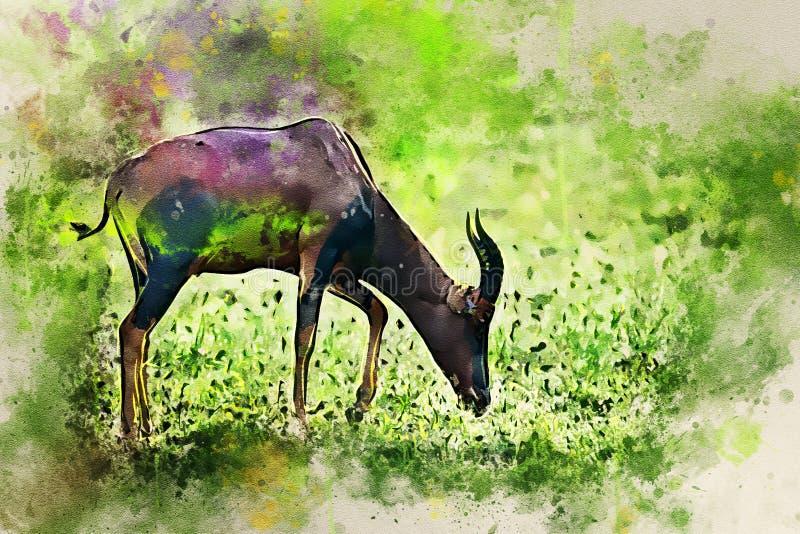 在非洲大草原的遮阳帽或Damaliscus korrigum 免版税库存图片