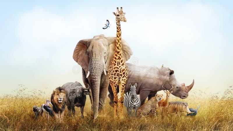 在非洲综合的徒步旅行队动物 库存照片