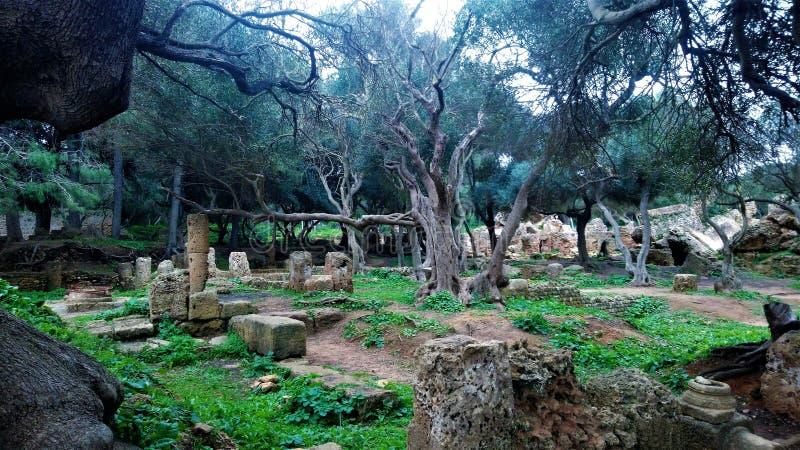 在非洲-阿尔及利亚的nourth的罗马历史废墟 免版税图库摄影