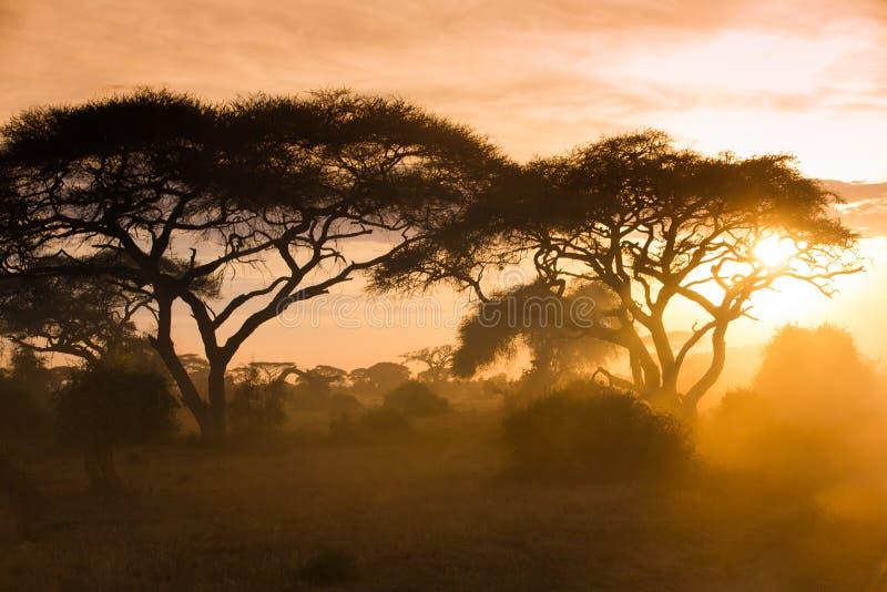 在非洲大草原的金子日落 库存图片