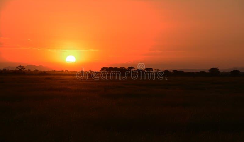 在非洲的平原的美好的日落 免版税库存图片