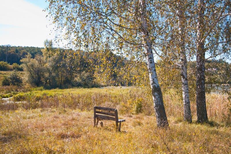 在面对桦树和浅长得太大的湖,森林的秋天领域的老和偏僻的长木凳在背景中 免版税库存图片