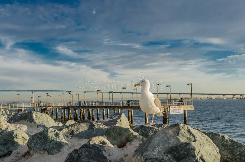 在面对的岩石的海鸥左 免版税库存图片