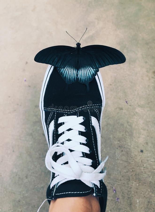 在鞋子的一次蓝色猩红色swallowtail蝴蝶着陆 免版税库存图片