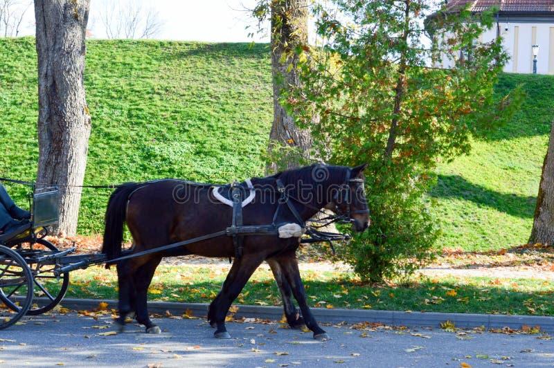在鞔具的一匹美丽的黑强的马进站支架 免版税库存图片