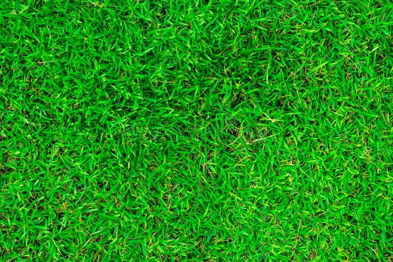 在顶视图的自然绿草 免版税库存图片