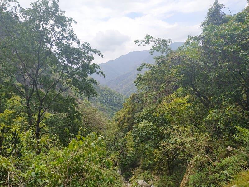 在顶面小山的绿色树和背景山是令人敬畏的 免版税库存照片