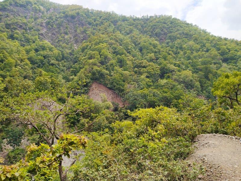 在顶面山的绿色树 免版税库存照片