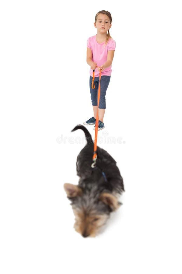 在领先的小女孩走的约克夏狗小狗 库存图片
