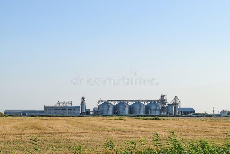 在领域中间的粮食作物 免版税库存图片