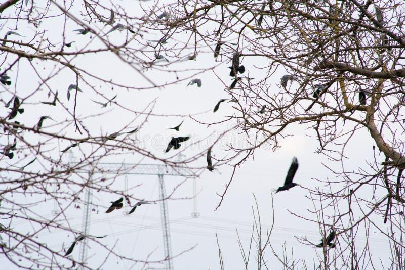 在领域和树中间的许多掠夺冬天 免版税库存照片