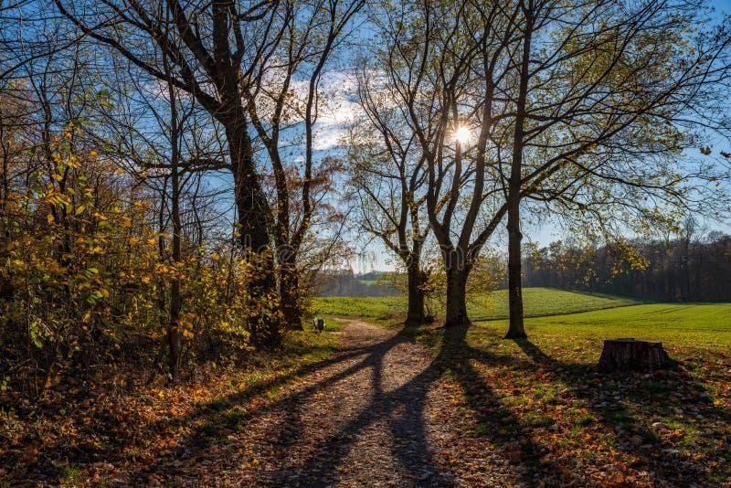 在领域和森林的美妙的看法在秋天,背后照明情况 图库摄影