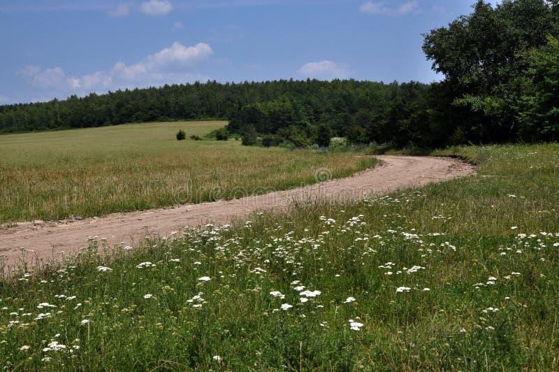 Download 在领域和森林边缘的夏天风景 库存图片. 图片 包括有 天空, 云彩, 绿色, 横向, 季节, 结构树, 中午 - 72367751
