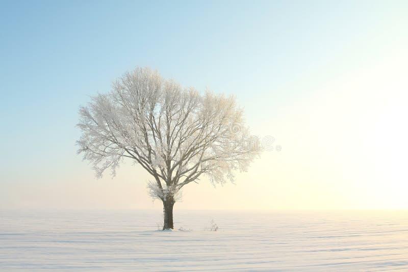 在领域的冬天树在日出 免版税库存照片