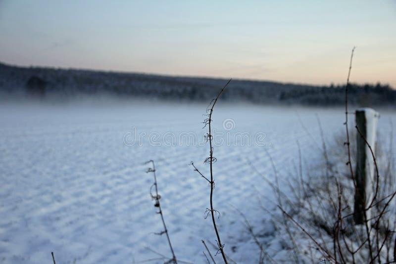 在领域的冬日 免版税库存图片