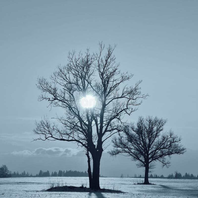 在领域的单独树 Monocrome摄影 免版税库存图片