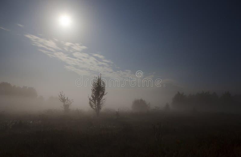 在领域的夜雾 库存照片