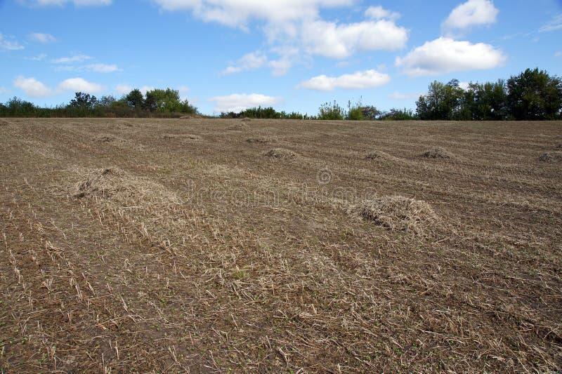 在领域的大豆秸杆 免版税库存照片