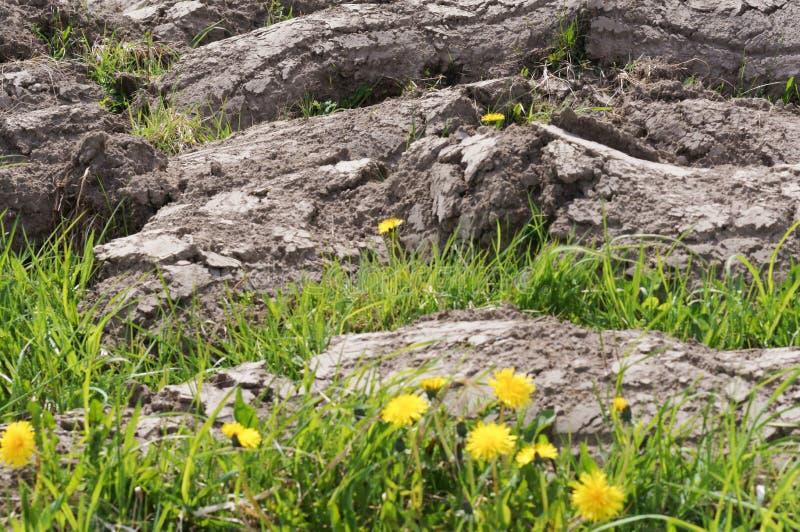 在领域的天旱,耕了处女土地 库存照片