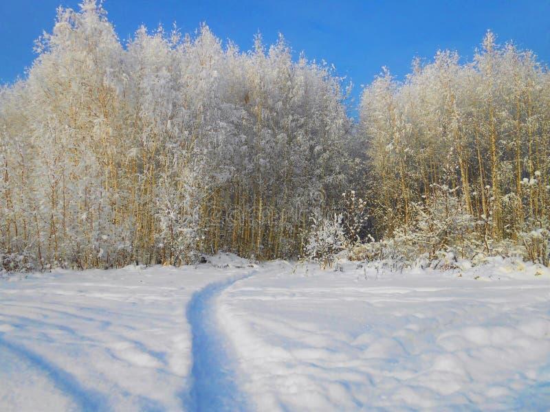 在领域的小冷淡的桦树与道路 图库摄影