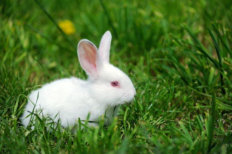 在常用的小的兔子在夏天领域鸟平鹦鹉吃药吗图片