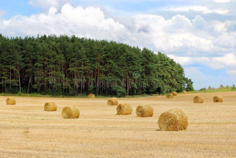 在领域的干草卷 免版税图库摄影