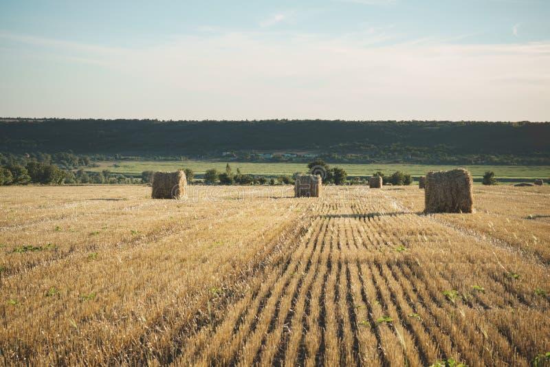 在领域的干草捆与麦子秸杆和天空在s的农场土地 图库摄影