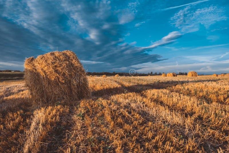 在领域的干草捆在秋天天气 免版税库存图片