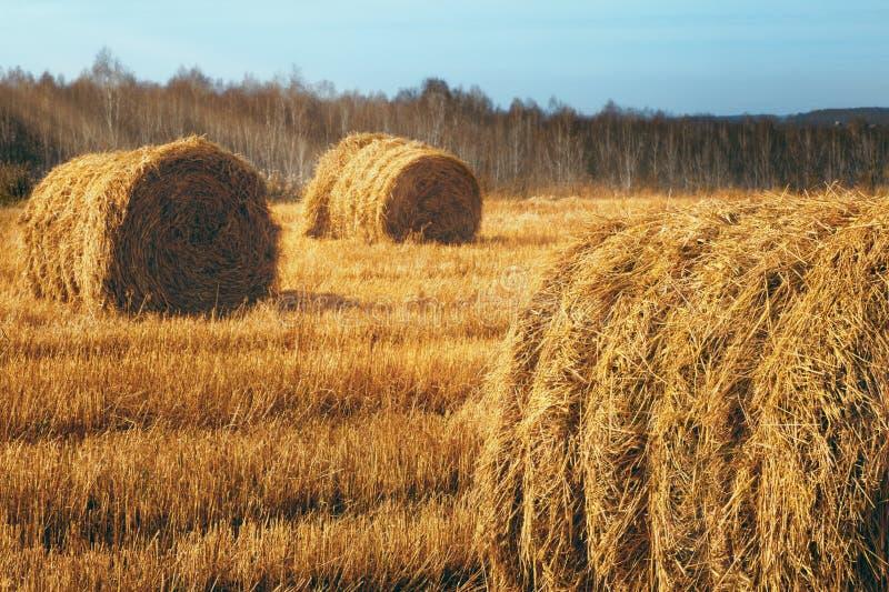 Download 在领域的干草捆 库存图片. 图片 包括有 蓝色, 地产, 乡下, 理想, 农场, 自治权, 云彩, 横向 - 30330313