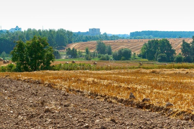 在领域的扭转的干草,捆绑干草,与扭转的干草堆的领域 库存照片