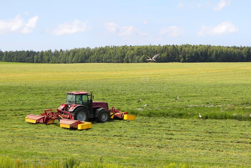 在领域的拖拉机,围拢由鹳 免版税库存图片
