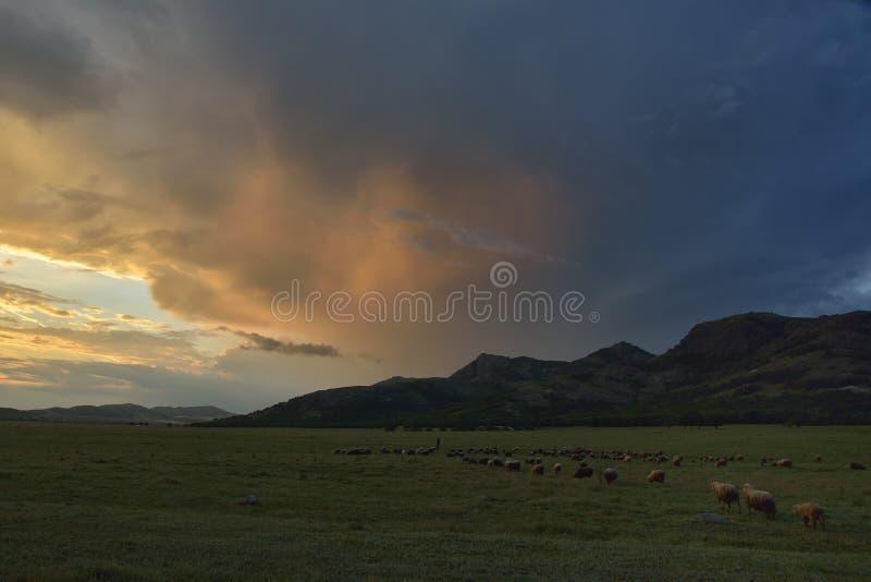 在领域的日落与绵羊 库存图片