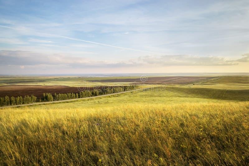 在领域的日落用金黄黑麦或麦子在与多云天空的夏天 ?? 库存图片