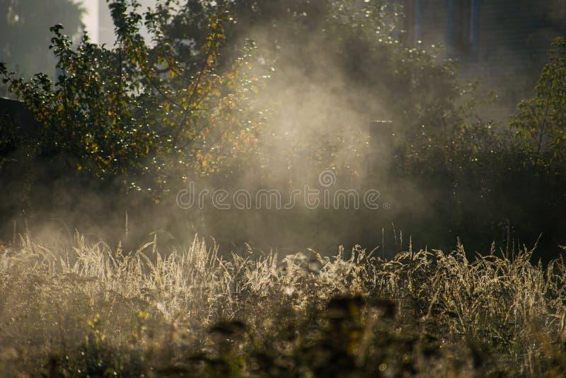 在领域的有雾的早晨 葡萄酒自然背景 与早晨露水的秋天草在太阳光特写镜头 秋天背景 图库摄影