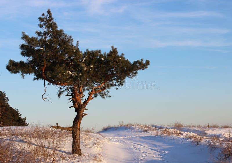 在领域的树。 库存照片