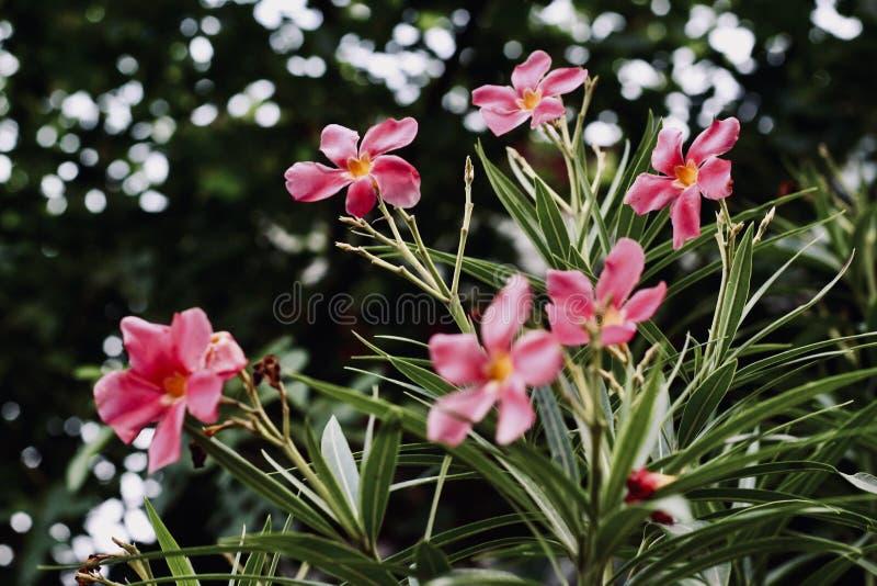 在领域的桃红色花 免版税库存图片