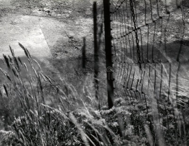 在领域的篱芭 库存图片