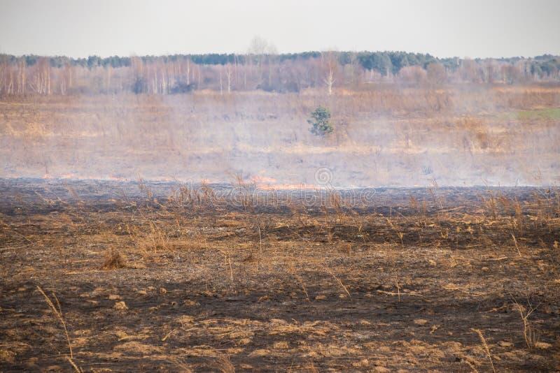 在领域的紧急状态,火烧与动物的干草 免版税库存照片