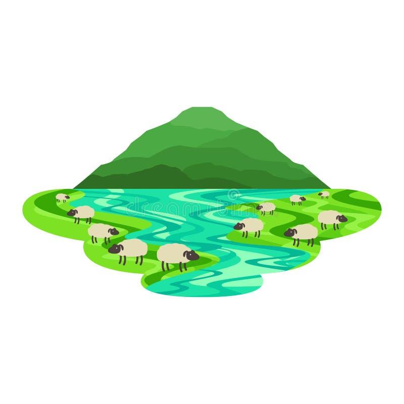 在领域的绵羊与湖乡下风景 皇族释放例证