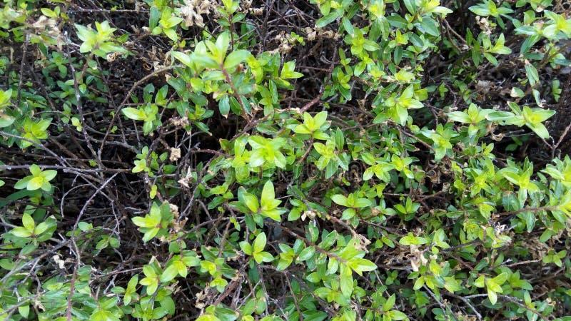 在领域的美丽的绿色叶子 库存照片