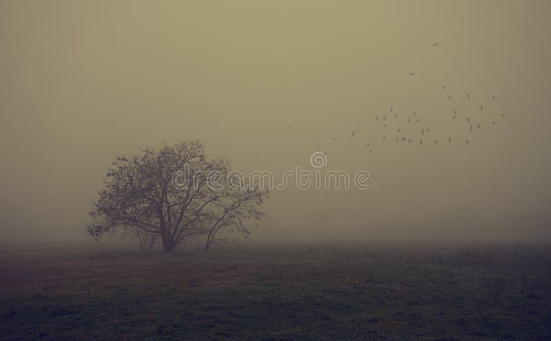 在领域的老树每有雾的天 免版税库存图片
