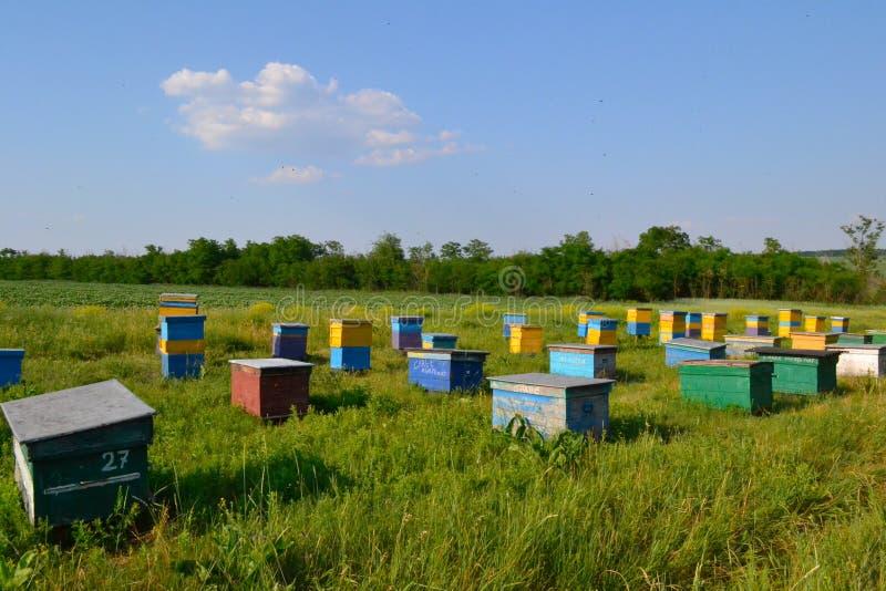 在领域的蜂蜂房 免版税库存图片