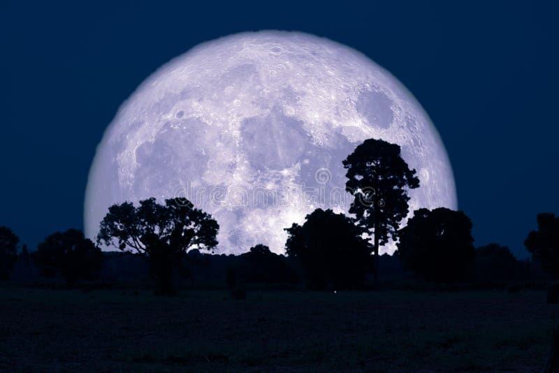 在领域的超级大型装配架月亮剪影树 库存照片