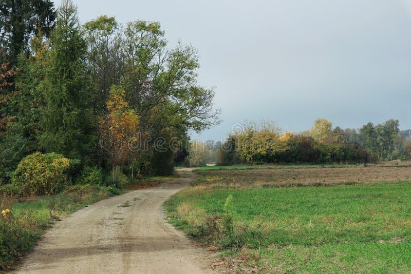 在领域的边缘的农村路 免版税库存照片